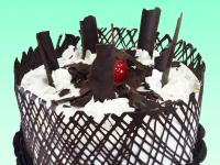 Gatto & Chocolate Cake